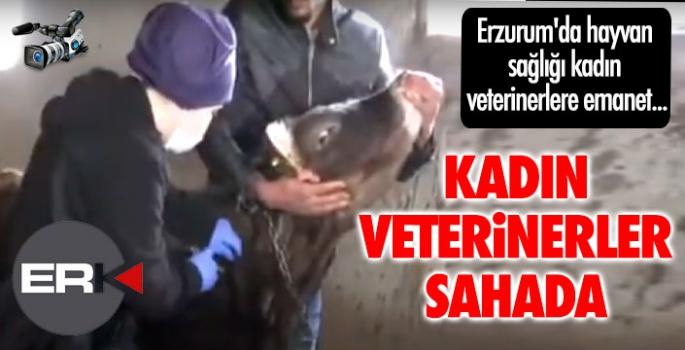 Erzurum'da hayvan sağlığı kadın veterinerlere emanet...