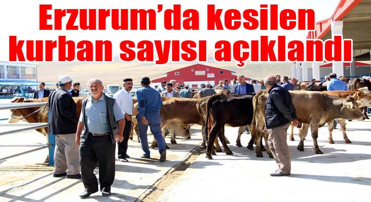 Kurban Bayramı'nda Erzurum'da bu yıl kesilen büyük ve küçükbaş hayvan sayısı açıklandı