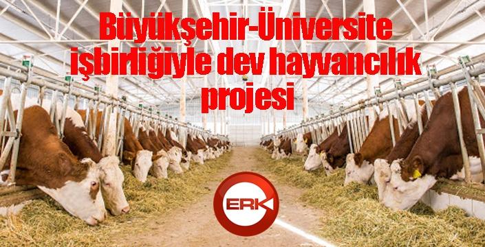 Büyükşehir-Üniversite işbirliğiyle dev hayvancılık projesi