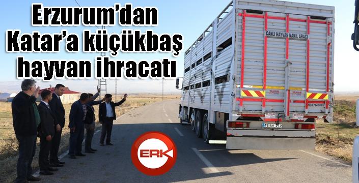 Erzurum'dan Katar'a küçükbaş hayvan ihracatı